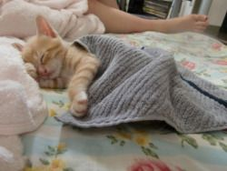 Love the little blanket!