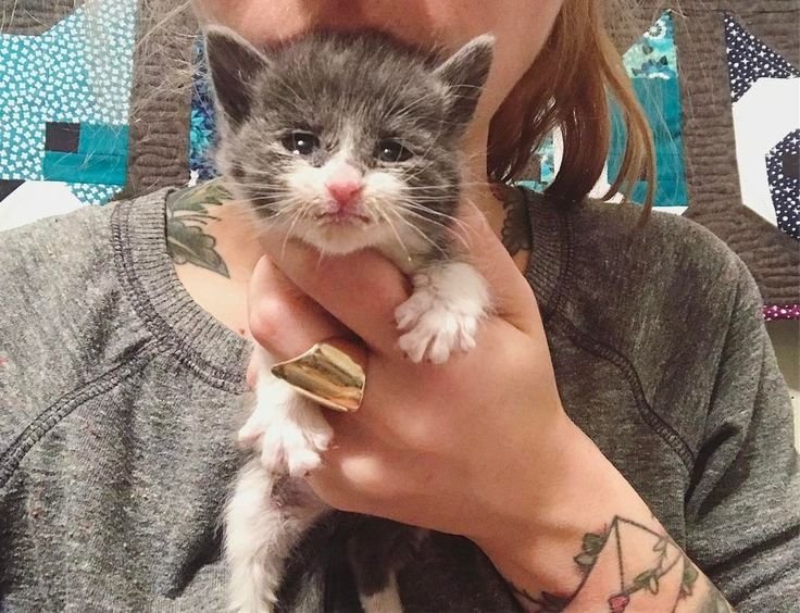Here's a beautiful story of a tiny kitten that was so small and weak that her mother couldn't care for her. The life of this little fur ball was saved byHannah Shaw, an animal rescuer …