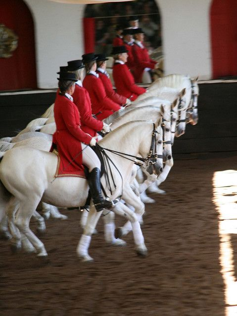*SPAIN ~ The Spanish Riding School of Vienna, Austria