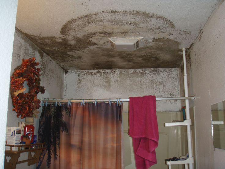 Mold In Bathroom Harmful the 25+ best bathroom mold ideas on pinterest | mold in bathroom