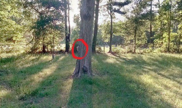 حوحو صورة التقتها خرائط جوجل لفتاة شبح في مقبرة تثير الرعب عبر الأنترنت Tree Blog Blog Posts