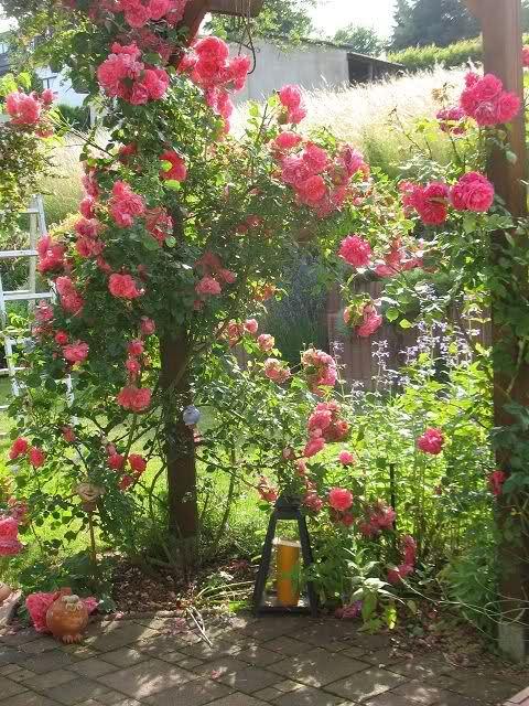 Beautiful Gartengestaltung Wenn der Garten nicht l ngs sondern quer ist Seite