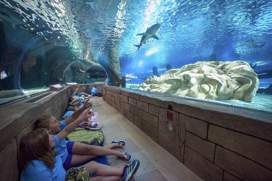 17 Best Images About Florida On Pinterest Free Things To