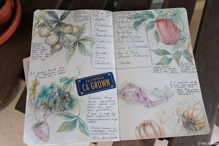 Harvest time page from sketch book