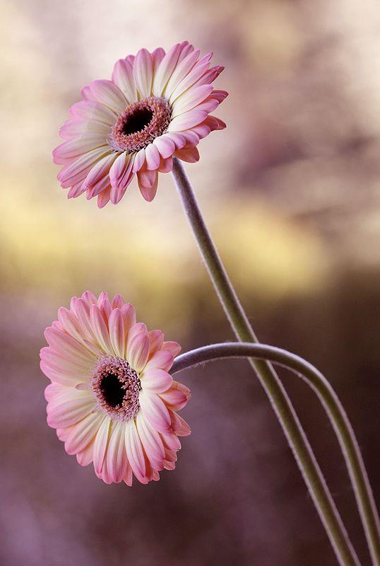 Photography by Mycatherine Katka. #flowers #photography #pink