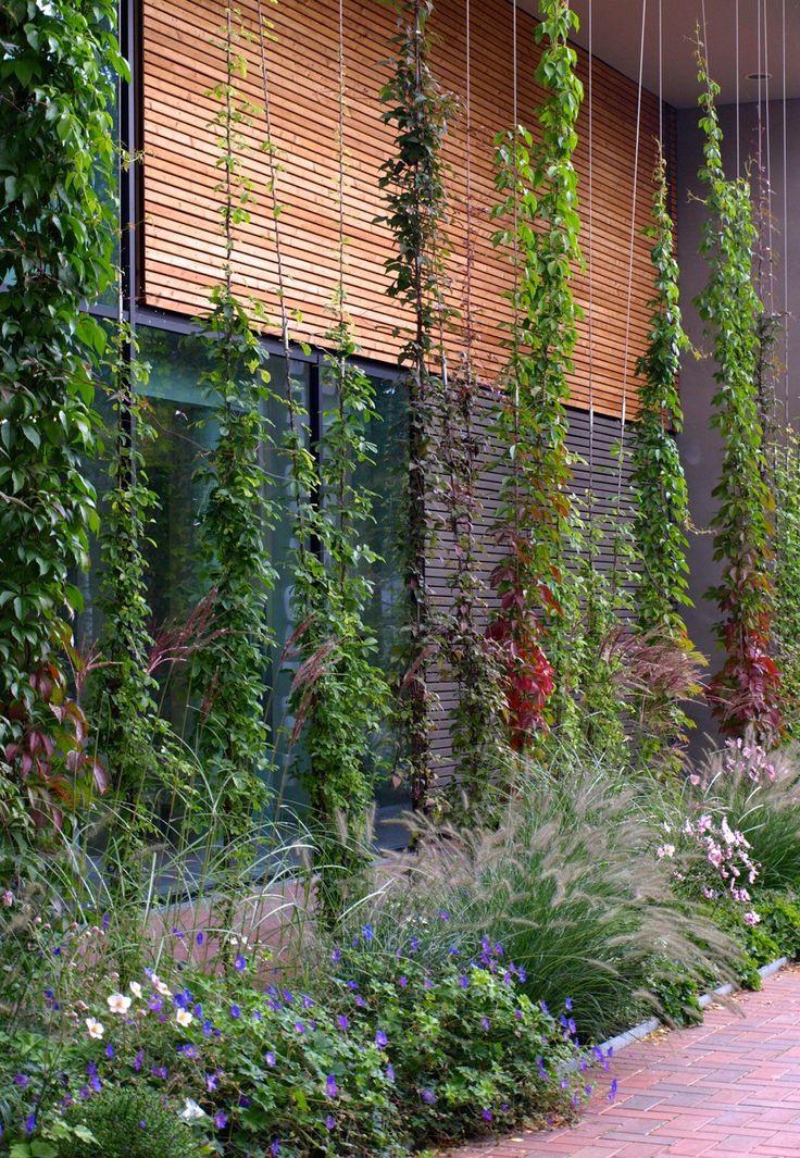 Växtval-Klätterväxter-på-vajer.jpg 884 × 1280 pixlar