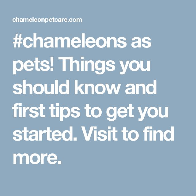 #chameleons as pets! Things you should know and first tips to get you started. Visit to find more.