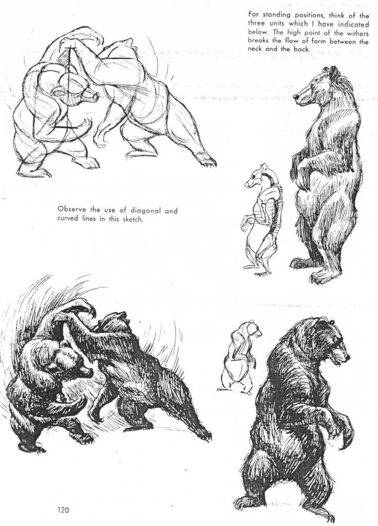 166 besten Bear Bilder auf Pinterest | Grizzlybären, Braunbären und ...