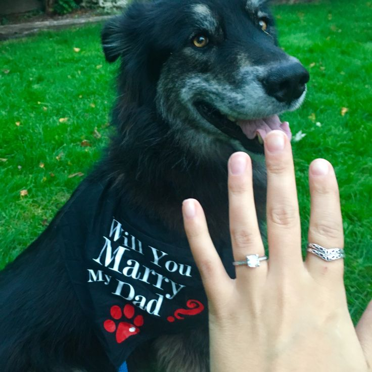 Will you marry my dad? Engagement surprise #engaged #dog #puppylove