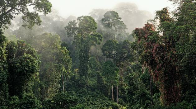 Sumatra Regenwald im Indonesien Reiseführer http://www.abenteurer.net/1831-indonesien-reisefuehrer/