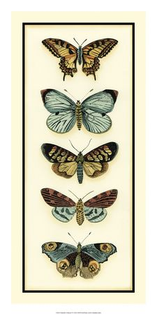 Vintage butterfly Posters and Prints at Art.com