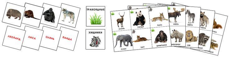 Игра «Дикие животные» — Сайт Татьяны Сороки — раннее развитие, развивающие игры для детей, курсы обучения педагогов раннего развития. На Земле живет огромное множество разных животных. Некоторые из них питаются растениями и их плодами, эти животные называются травоядные. Другие же питаются теми кто поменьше, другими животными, эти животные хищники. Игра познакомит ребенка с самыми известными дикими животными, научит различать их виды, поможет запомнить как животные выглядят и называются.