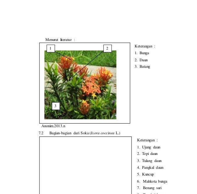 Bagian Bagian Bunga Asoka