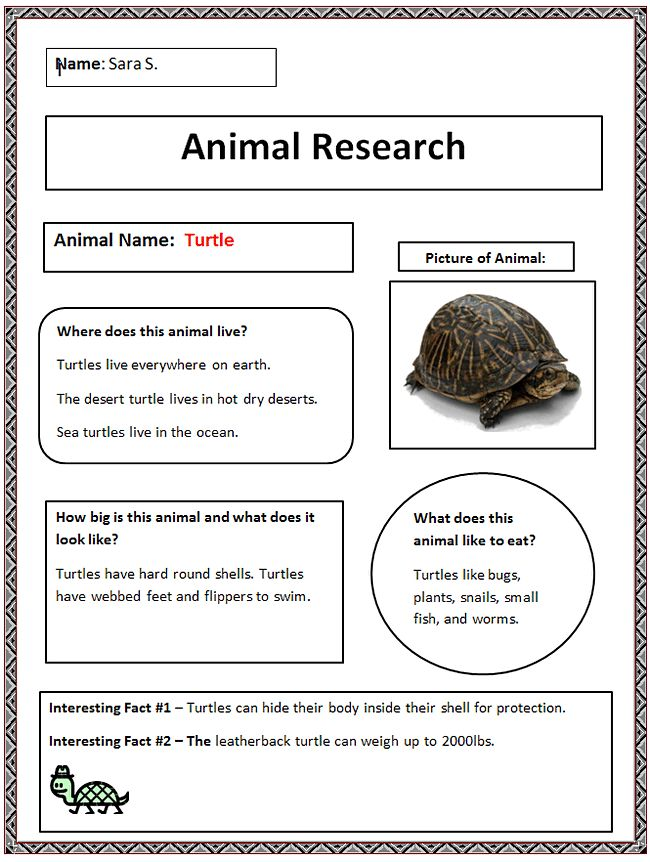 47 best endangered animals images on Pinterest Animal activities - animal report template