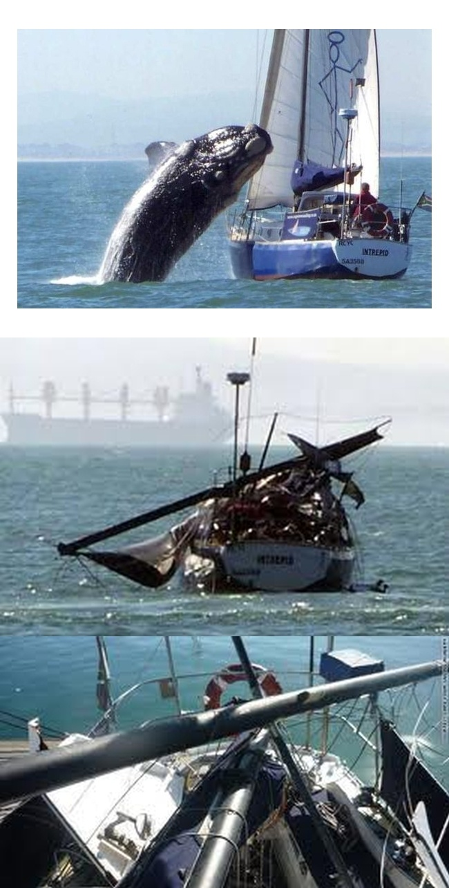 Real - This is a real collision between a sailboat and a juvenile Southern Right Whale, which was breaching, off the coast of South Africa. Although, there are several strange coincidences related to this event. The photos were taken from a boat which happened to be following and had a camera at the ready. No major damage to the hull and they claimed the whale suffered no serious injury.