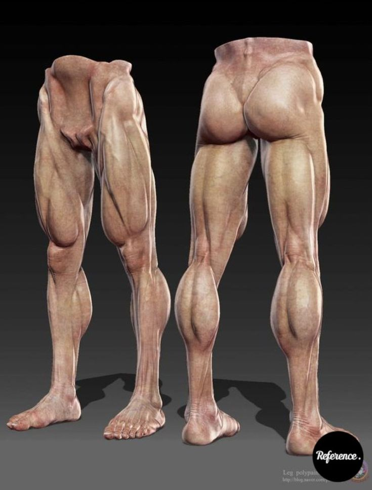 194 best Anatomy - Legs images on Pinterest | Anatomy reference, Art ...