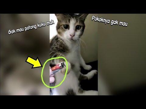 Download 89+  Gambar Kucing Ngambek Terbaik HD