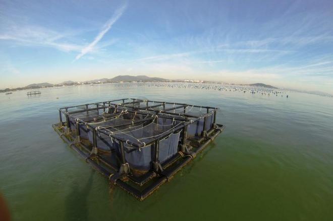 Peixes de pesquisa da Univali são furtados de tanques no mar em Penha Divulgação/Centro de Ciência Tecnológica da Terra e do Mar / Univali