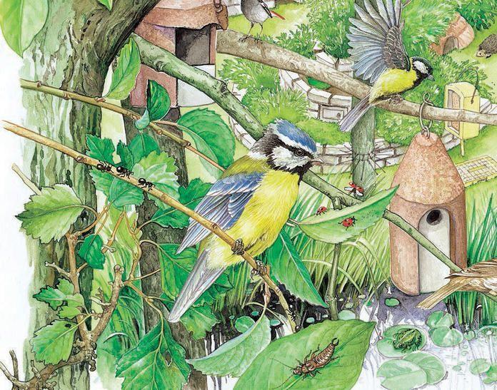 So Locken Sie Mehr Vogel In Ihren Garten Vogel Mit Nistkasten Aste The Post So Locken Sie Mehr Vog Garden Projects Pallet Projects Garden Diy Garden Projects