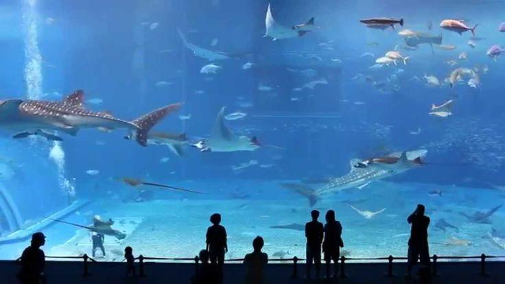 Um dos maiores aquários do mundo! Kuroshio Sea ( HD )