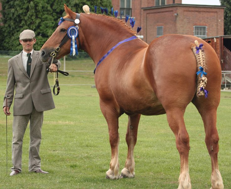 certain horse breeds are designed to Horses have been domesticated for thousands of years, and in that time we've had a chance to influence some extraordinary breeds.