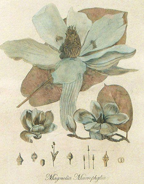 17th Century Botanical Prints | Lyndi Sales Blue Florilegium