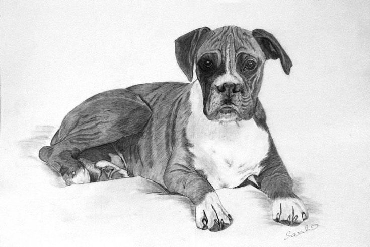 17 Best Images About Dog Drawings On Pinterest | Beagles Dogs And Puppies And How To Draw