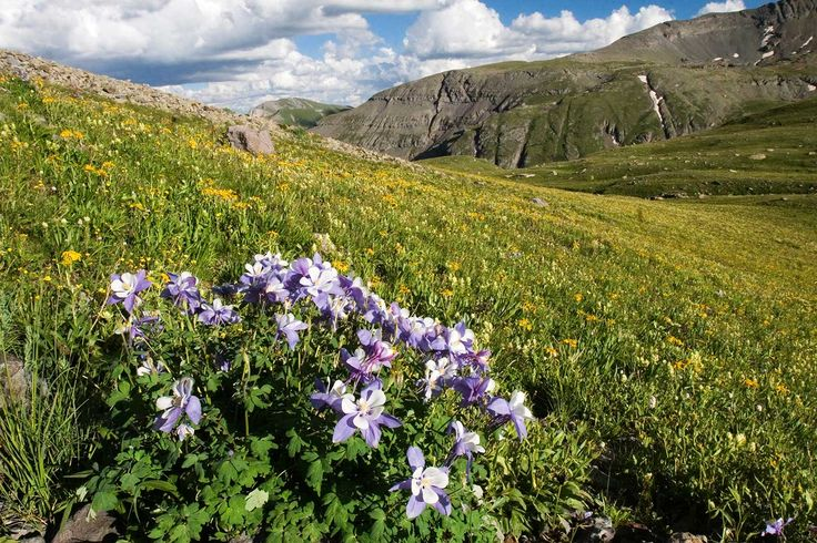 5 Colorado Wildflower Hikes  <><><>   Alpine meadows are home to some of the most vibrant and colorful collections of Colorado wildflowers. A wildflower hike through these meadows, including Roxborough State Park near Denver, can be one of spring and summer's most serene adventures.