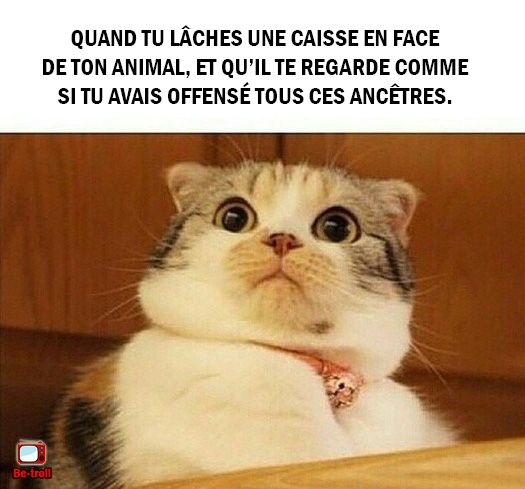 Quand tu pètes en face de ton animal... #Chat #Animaux
