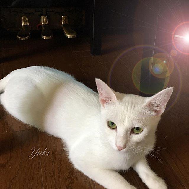 今日はピアノの練習しにゃ🐾いのですか❓ 🐱#cat #猫 #ねこ #愛猫 #譲渡会 #里親 #そめごろう #キジトラ #きじとら #子猫 #仔猫 #ゆめ #yume #夢 #ゆき #yuki #ねこ部 #こねこ #可愛い #cute #癒し #宝物 #にゃんすたぐらむ #トライアル #picneko #ピクネコ #ペコねこ部