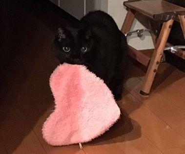 お風呂が大好きな猫 一緒に入ると、お礼の品が?!