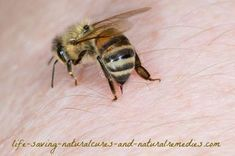 7 Home Remedies for Bee Stings That Work Like a Charm! -- Here's 7 of the best (and fast-acting) natural bee sting treatments you can easily use at home. If you or a loved one gets stung by a bee or wasp, it's crucial that you reduce the pain and swelling immediately. These remedies do just that without causing any harmful or worsening effects...