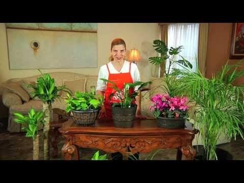 The 25 best plantas ornamentales de sol ideas on - Plantas ornamentales de interior ...