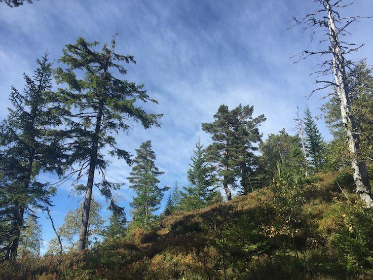 Skibergfjellet: Climbing vestfold's tallest mountain
