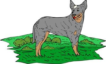 Facts about Blue Heelers...they are the best should be the first fact!