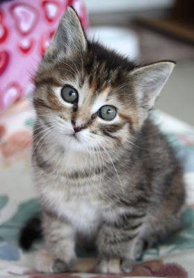 Imagenes de gatos - gatitos: Foto de gatito en tonos grises 04-05-2014