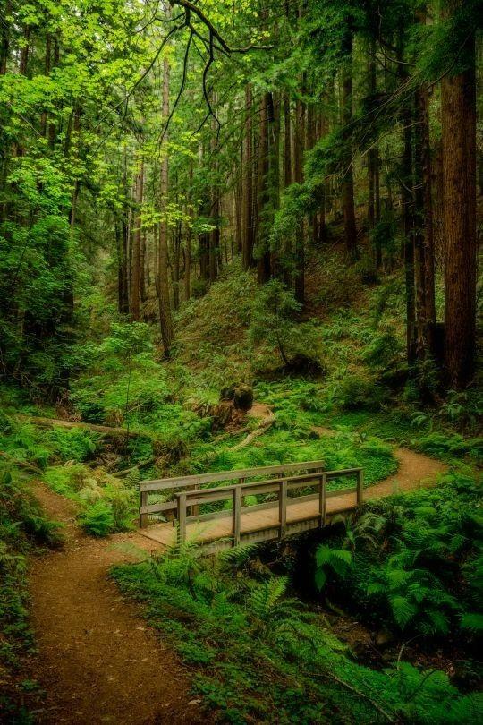 Forest Path Landscape Beautiful Landscapes Beautiful Nature