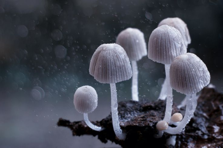 Photo Dream world by Sreekumar  Mahadevan Pillai on 500px