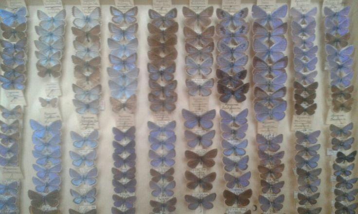 Entomologova zbírka