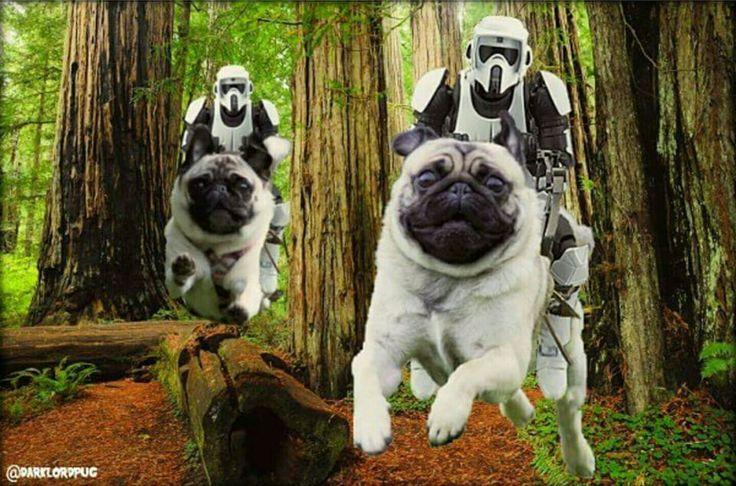 #StarWars speeder bike #Pugs! We want THIS movie ! #Cuteness…