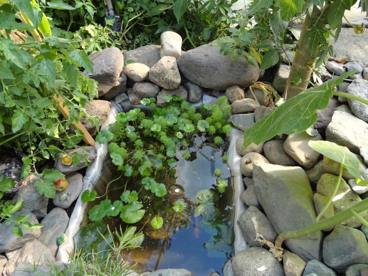 Peque o estanque de agua en el vivero de mis amigos for Estanque koi pequeno