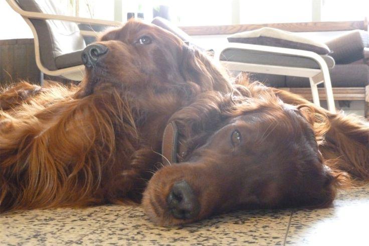 De huisdieren van onze lezers