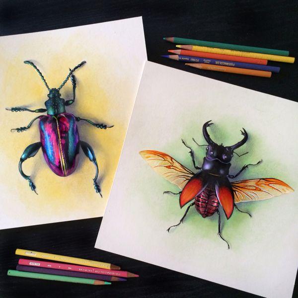 Beetle Studies, Colored Pencil by Morgan Davidson, via Behance