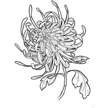 Crisantemo tattoo