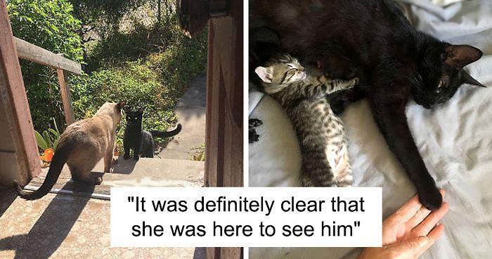แมวจรจ ดต วเม ยได เข ามาในบ านมา พบร ก ก บแมวต วผ ของเจ าของบ าน แล วมาขอ คลอด ล กแมวในบ านเพ อให ล กๆแมวของเธอปล Stray Cat Cats Heartwarming Stories
