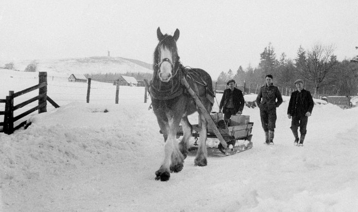 Black and white photograph, copy negative, showing a horse pulling a sledge over the snowy road. Taken in Cortachy, Angus, in the winter or early spring of 1947.