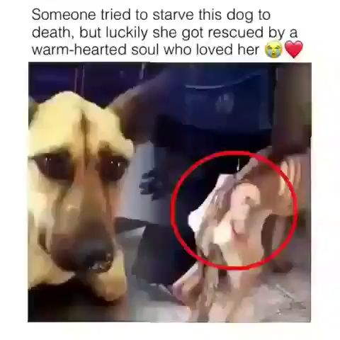 Dog Rescued On Very Critical Condition ♥️❤️