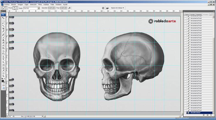 Trabajando en el próximo módulo de mi curso de figura humana. - La cabeza – Estructura y cánones de proporción. Modelado y volumen. – La cara – Gestos, músculos y mucho más…