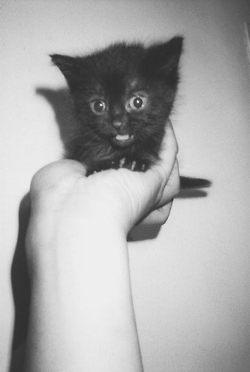 ahhhh!!!Kitty Cat, Black Kitty, Chat Noir, Baby Kittens, Baby Pictures, Black Kittens, Blackcat, Black Cat, Cat Lady