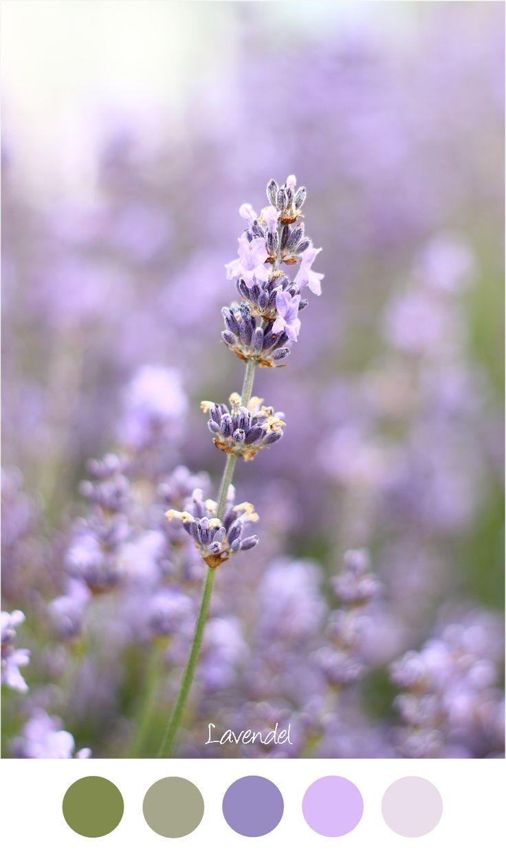 Lavendel - Kleurenpalet voor in het interieur. Lila / paars en groen